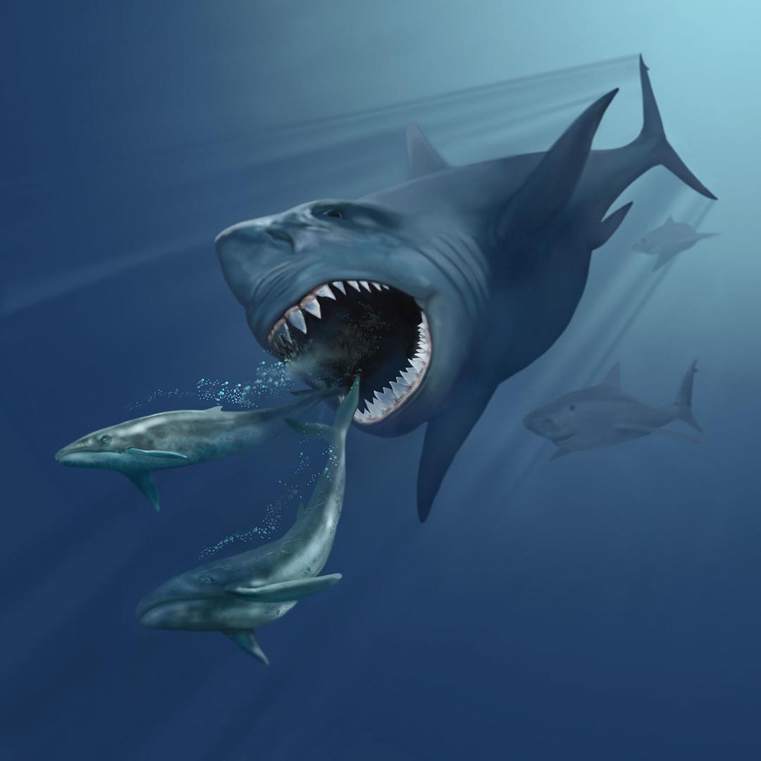 Мегалодон — топ 10 фактов о гигантской доисторической акуле