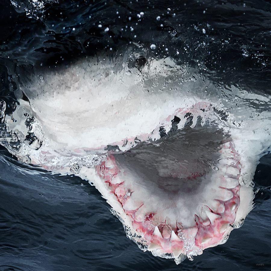 Гигантская акула мегалодон