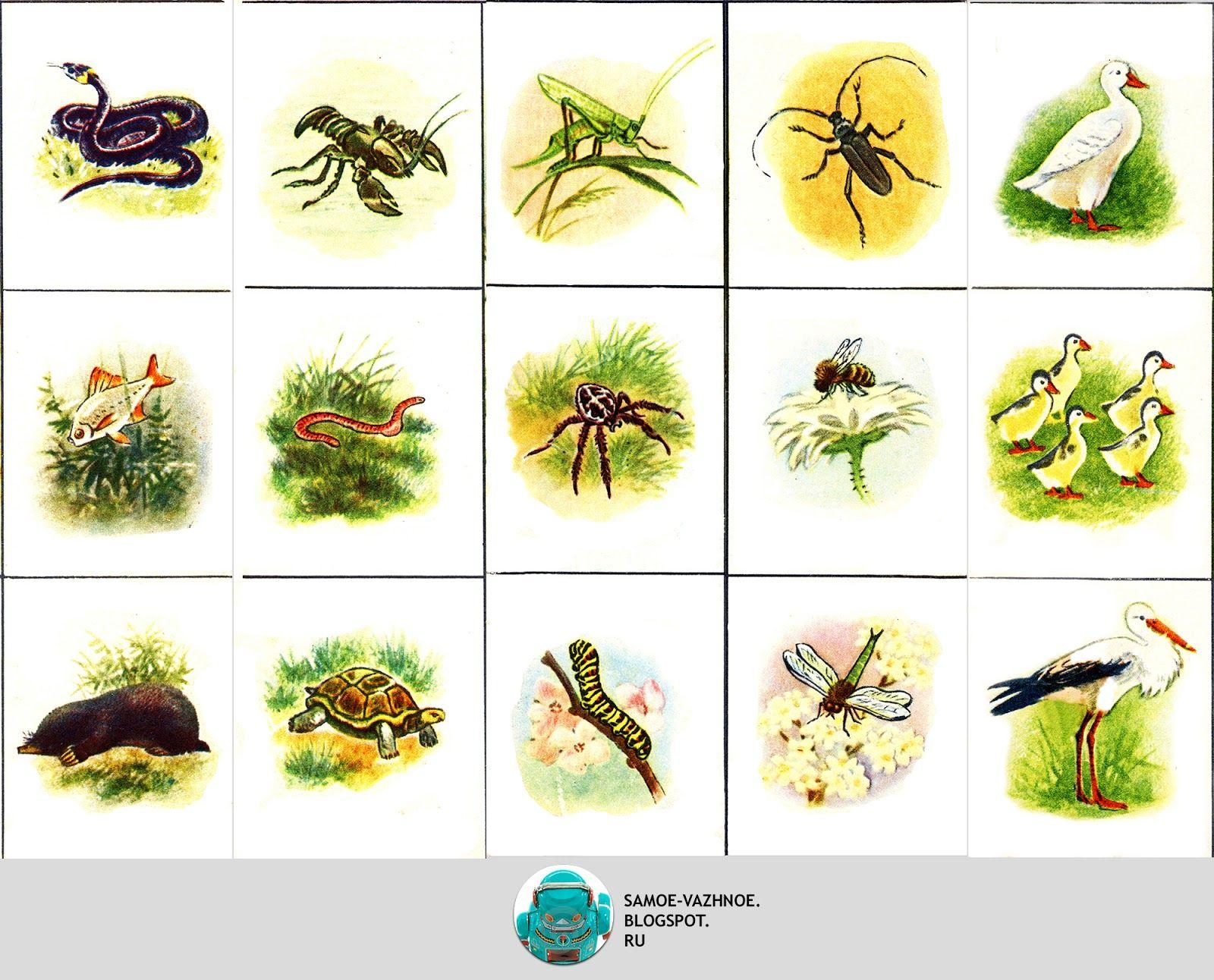 """Игра по  экологии """"флора и фауна""""  - внеурочная работа, мероприятия"""