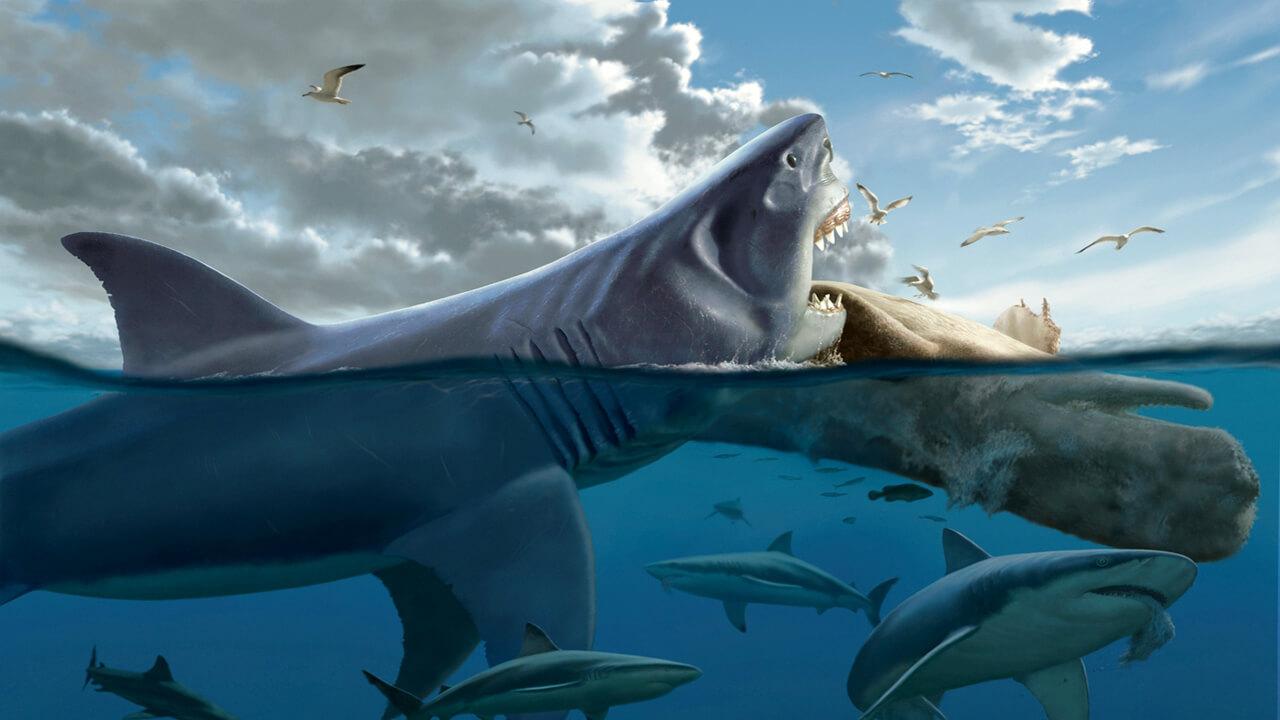 Топ 10: самые интересные факты о мегалодоне — природа мира