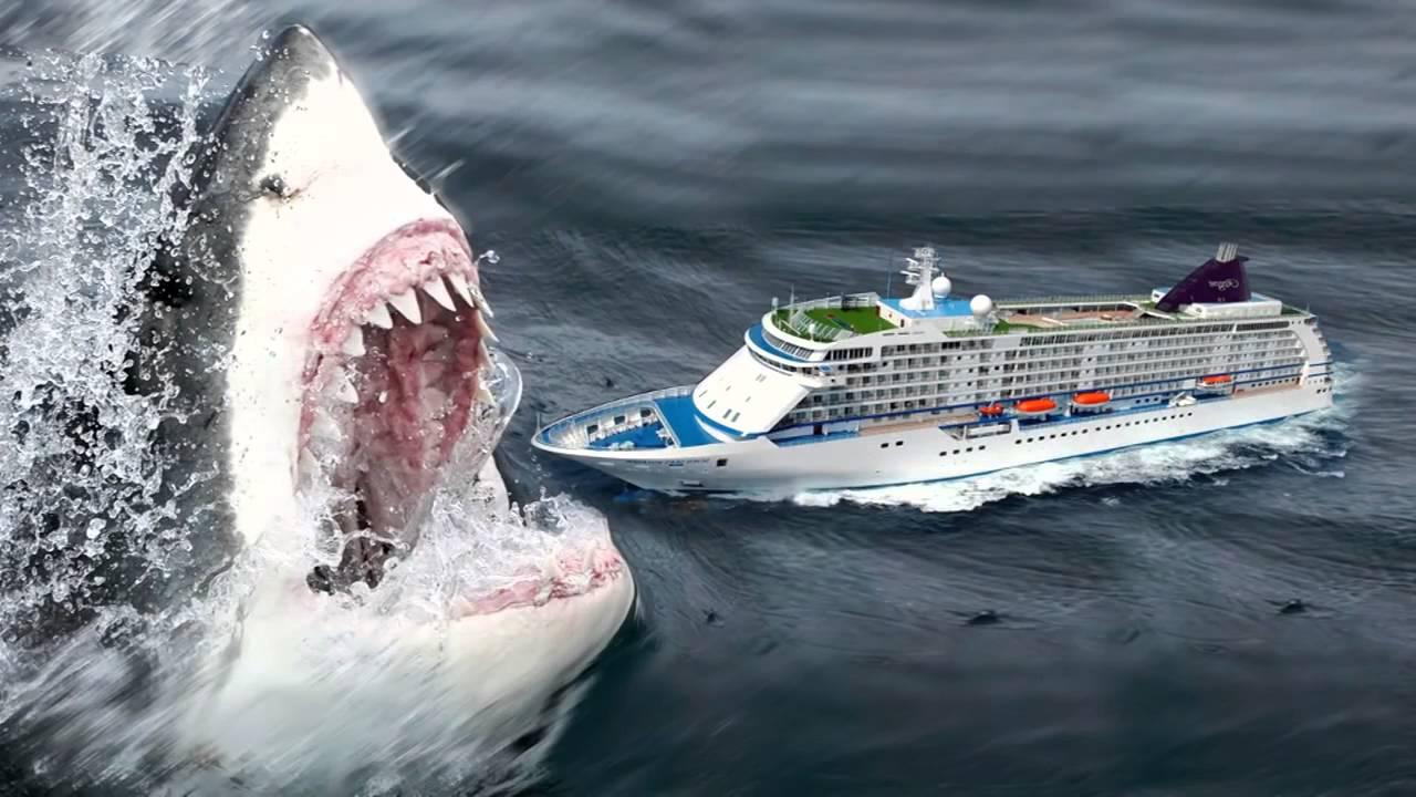 Мегалодон: акула монстр из прошлого   живой мир - природа